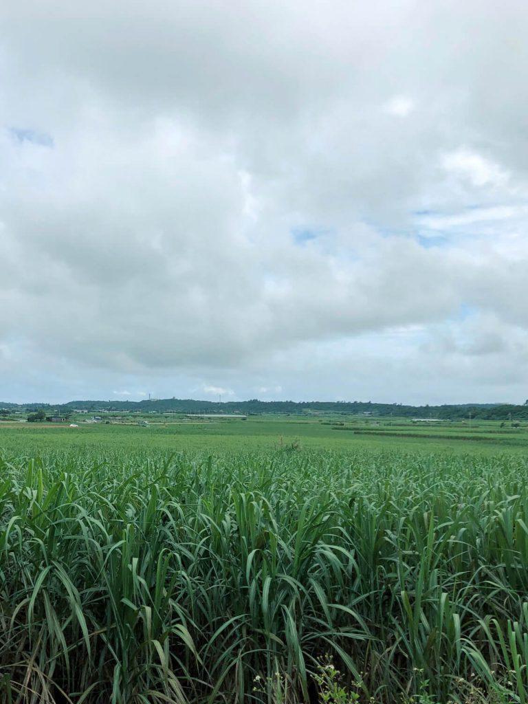 5月13日 今日は番外編!宮古島は曇り