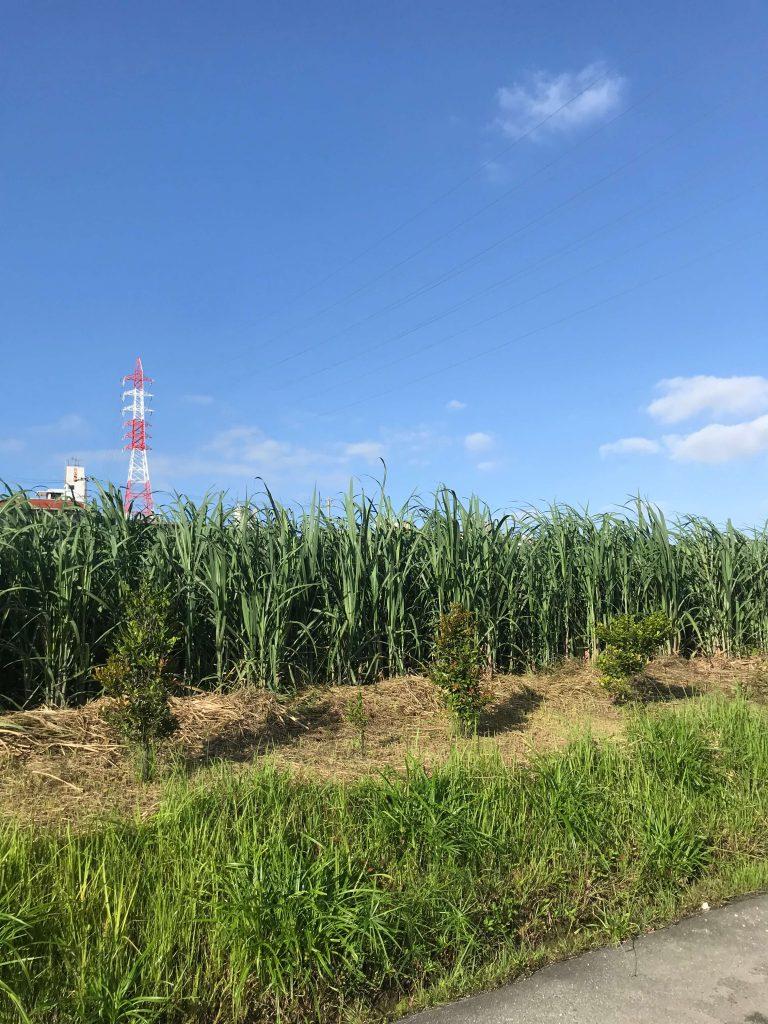 5月21日 今日の沖縄はニンガチカジマーイかと思うほどの風です。
