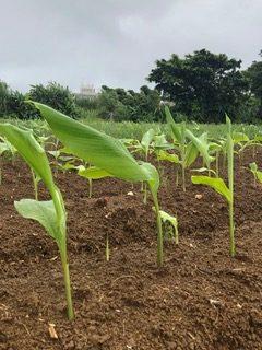 6月20日(旧暦5/18)今日の沖縄は朝から雨です。