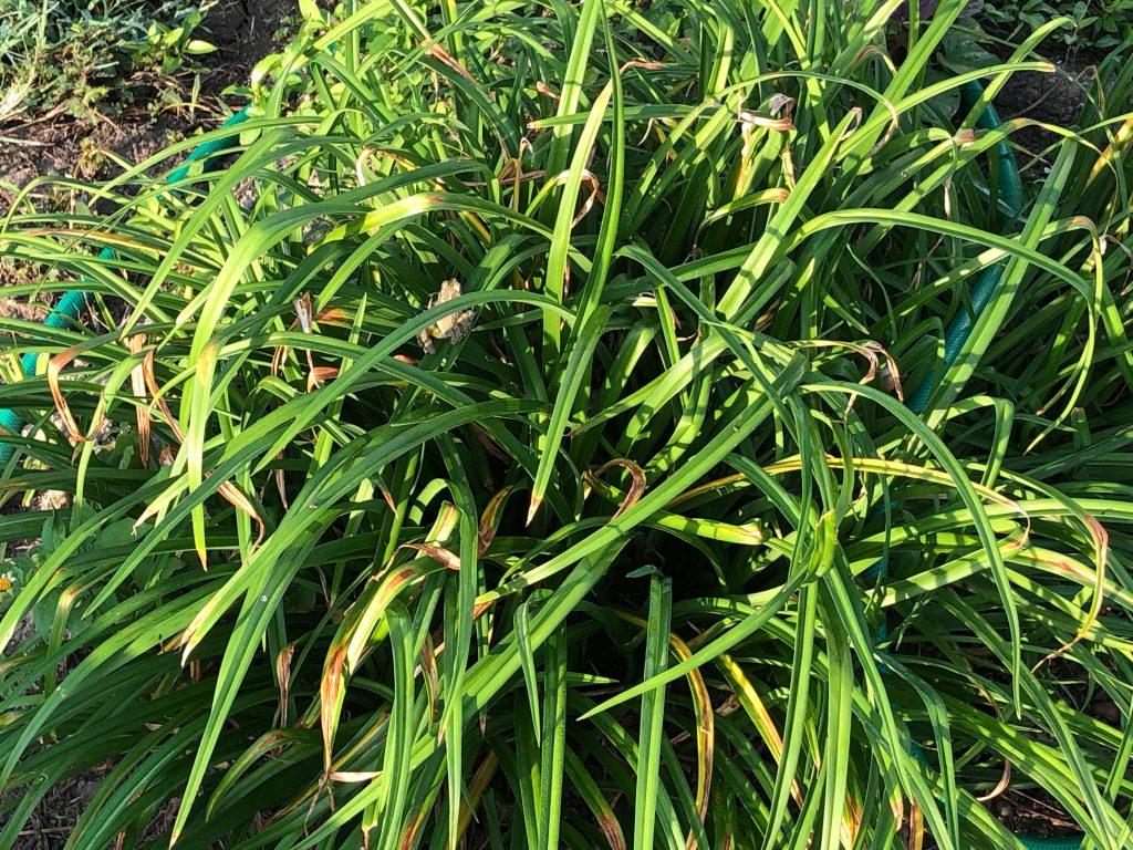 【草むらの中に1匹のカエル。かくれんぼが上手です。見つけられますか?】